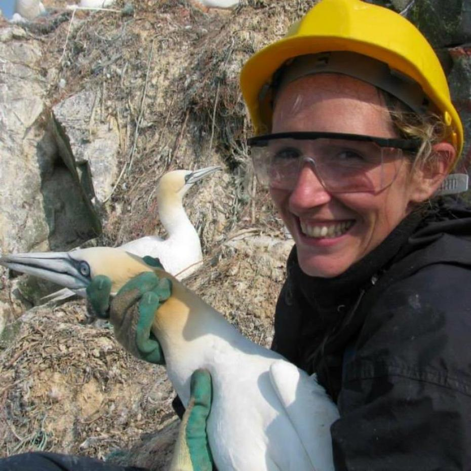 Successful study gives positive outlook for Alderney's seabirds